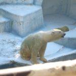 天王寺動物園で3世代家族、遊びまくりました