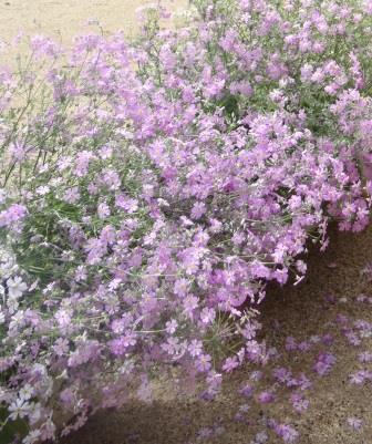 spring1501